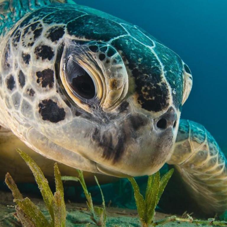 proteccion-de-tortugas-marinas-2020